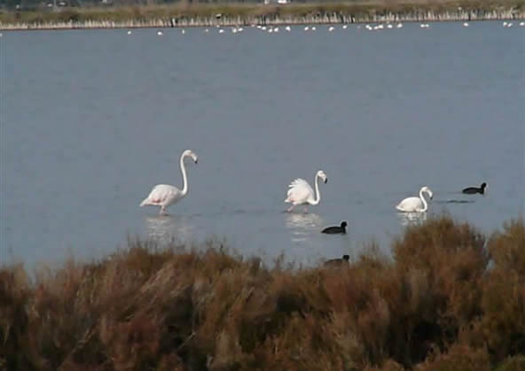 Orbetello Lagoon