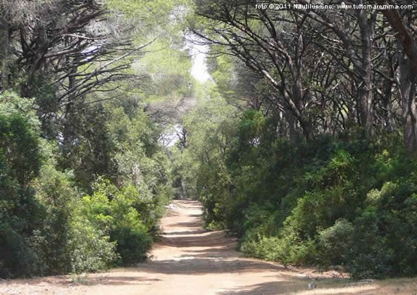 Orbetello - forest reserve