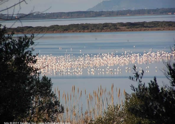 Orbetello - Fenicotteri in laguna
