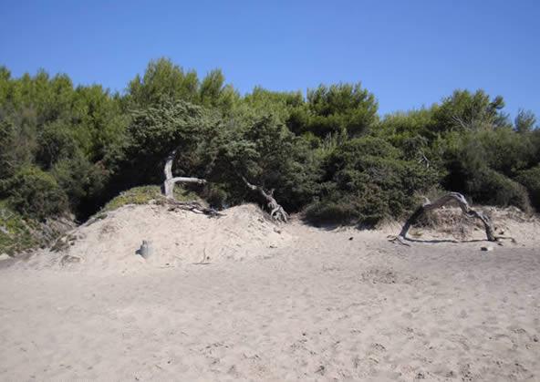 Carbonifera beach