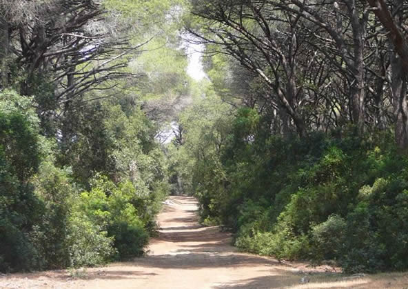 Riserva Naturale Duna Feniglia